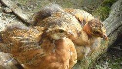 la composition des poules est publiée sur le site du district